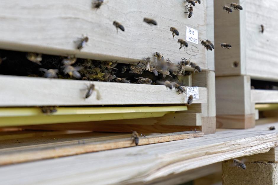 KONTEXT:Wochenzeitung - Ausgabe 345 - Gift für Insekten